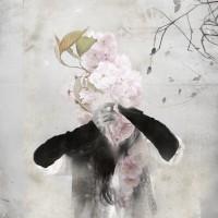 Spring ephemeral 2
