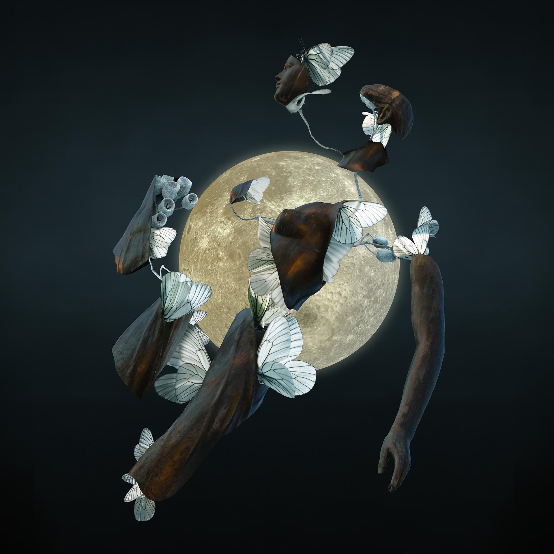 月夜の羽化 by Erika Kusumi